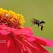 Wasp by Ringgo Gomez