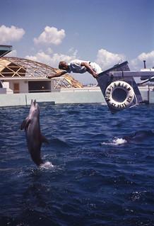 Dolphin performing at the Aquatarium in St. Petersburg Beach, Florida