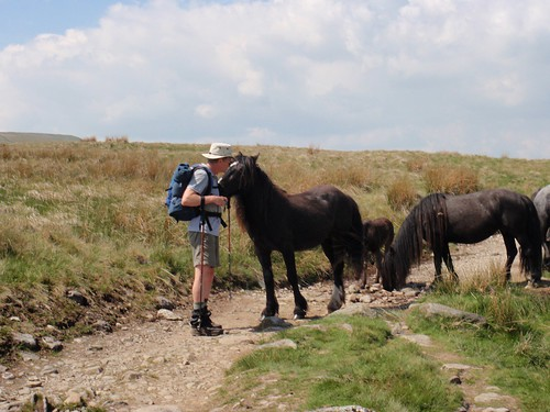 Britt gets friendly with the fell ponies