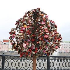 Mosca - Albero degli innamorati