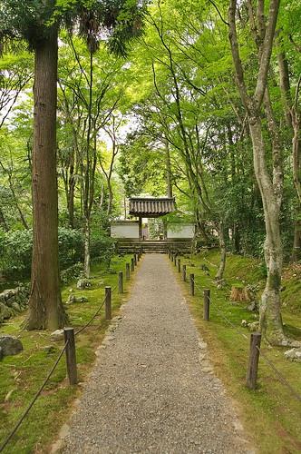 【写真】2013 青葉 : 地蔵院/2021-07-28/IMGP0966