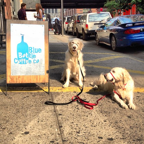 Occasional #bluebottle dogs