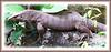 Monitor Lizard (Varanus bengalensis)