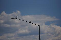 Original Crow and Camera