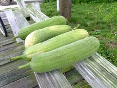 melon(0.0), cucumber(0.0), cucurbita(0.0), vegetable(1.0), plant(1.0), produce(1.0), fruit(1.0), food(1.0), winter melon(1.0), gourd(1.0),