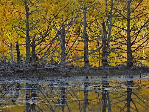 wood trees reflection scenery decay newengland foliage oldline