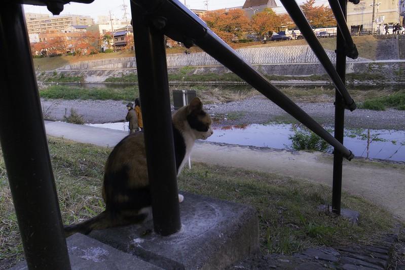 秋の風景-5