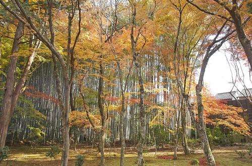 【写真】紅葉 : 地蔵院