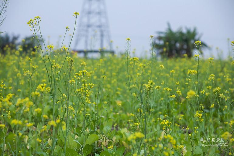 台南私藏景點--德元埤&老牛的家 (37)