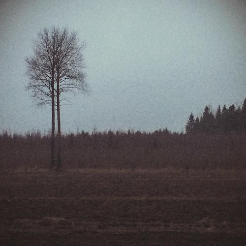 winter tree nature field finland landscape europe iphone kouvola mustajoulu iphone5s vscocam