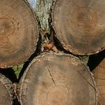 Five logs