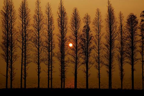china trees silhouette sunrise canon zhejiang dianshan eos700d