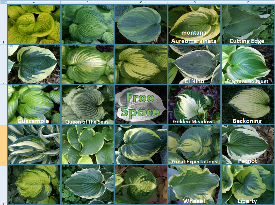 2014 Hosta Bingo - 2nd update