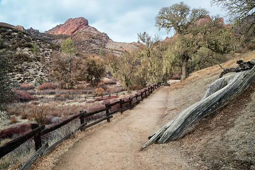 california landscape nationalpark oak trail spanishmoss pinnacles balconiestrail pinnaclesnationalpark westpinnacles