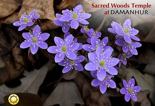 The flowers are blooming in the Sacred Woods