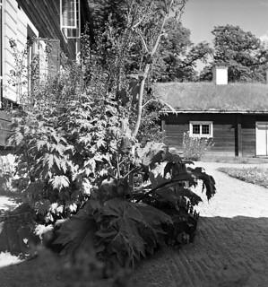 Hammarby of Carl Linnaeus, Uppland, Sweden