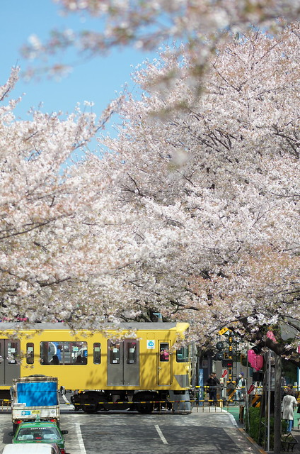 Tokyo Train Story 西武新宿線 2014年4月5日