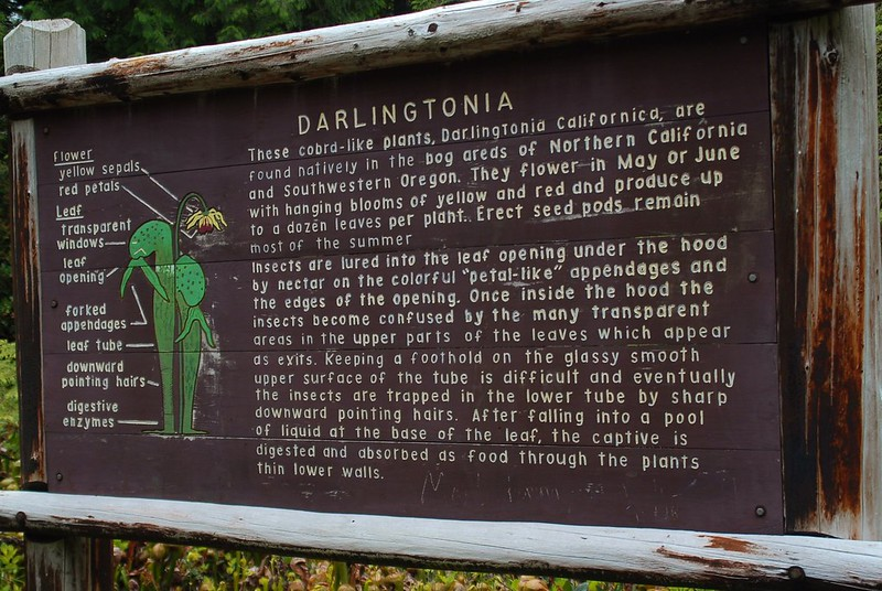 darlingtonia sign