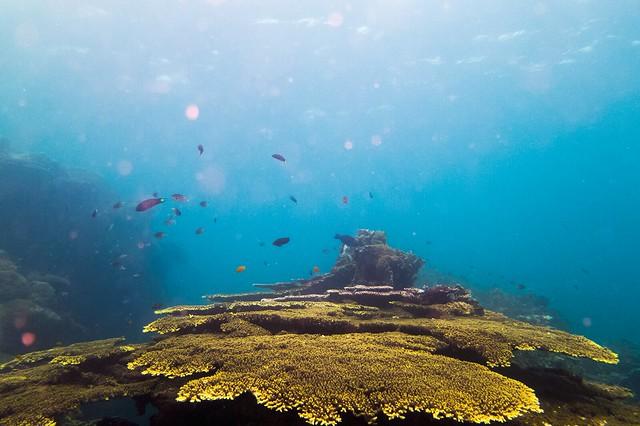 Tioman diving by Anton Veselov via TinyBlackBird.com