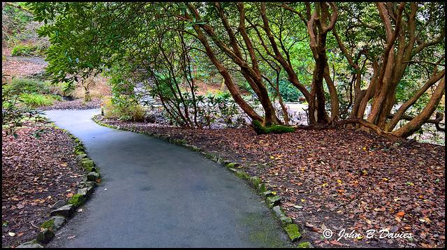 Walk in the Park ( Clyne ) 17th February 2017 -