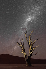 The Milkyway in Deadvlei
