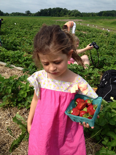 Ky in the strawberry patch