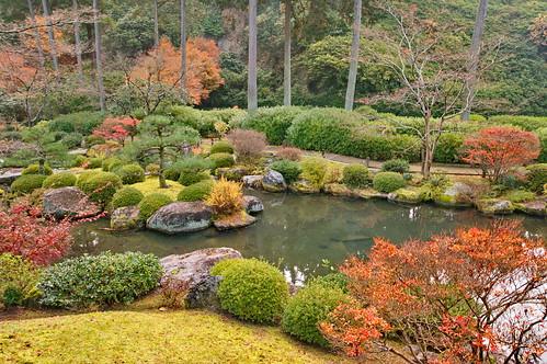【写真】紅葉 : 三室戸寺