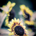 Flower2 by Bob Sandor 2016