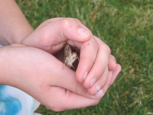 Butterfly Release 2013