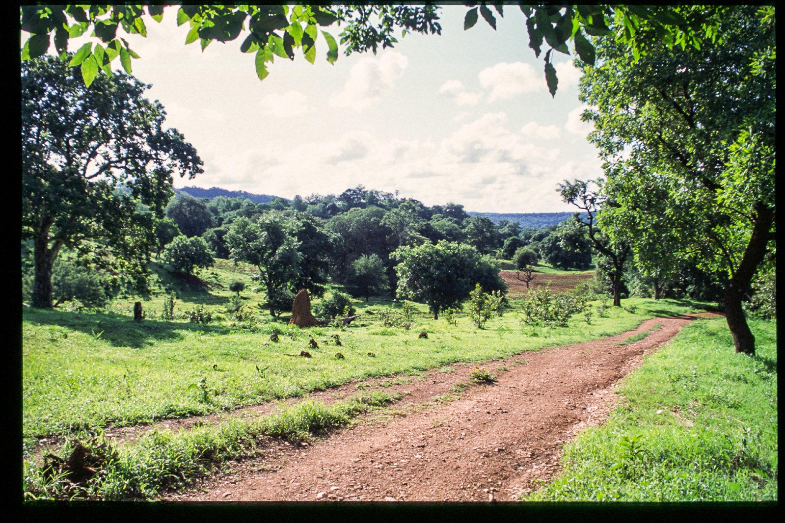 Senegal - En route pour le pays bassari