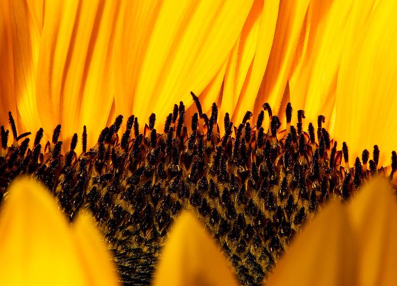 IMAGE: http://farm4.staticflickr.com/3820/9778348103_7bd6b1d580_c.jpg