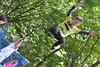 Highgate Wood Bromeliad 2013
