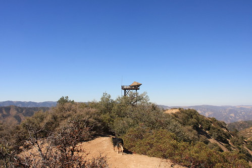 Cuyama Peak Lookout/AWS Cabin Remains No. 8