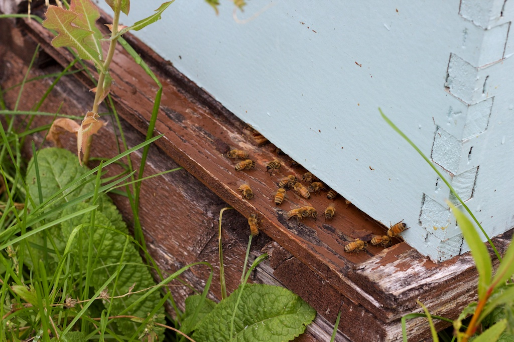 Hive (stack) entrance