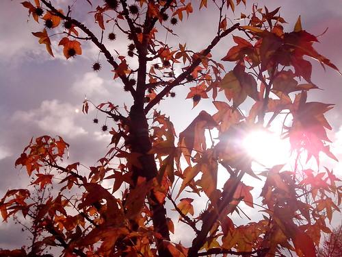 Sole e nuvole tra le foglie d'autunno by Ylbert Durishti