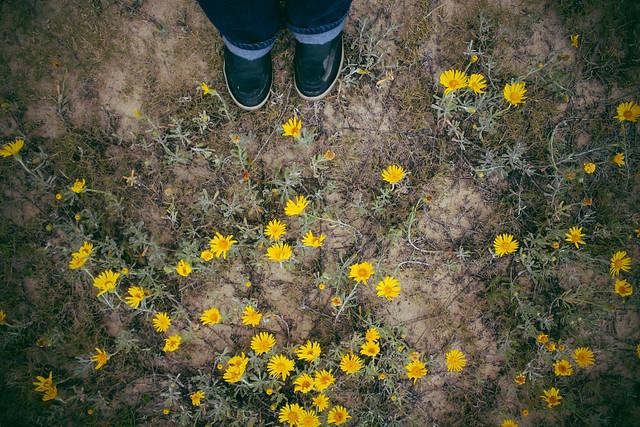 spring still lives