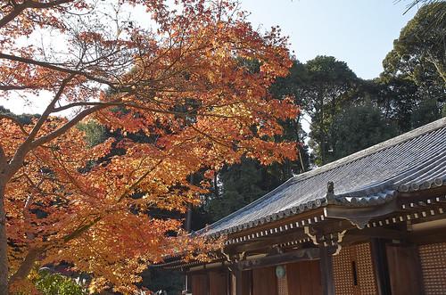 【写真】2013 紅葉 : 浄瑠璃寺/2019-08-22/IMGP3535