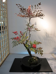 Japanese flower arrangement 56, Ikebana: いけばな