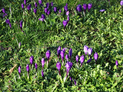 Blackheath RS Already spring flowers! width=