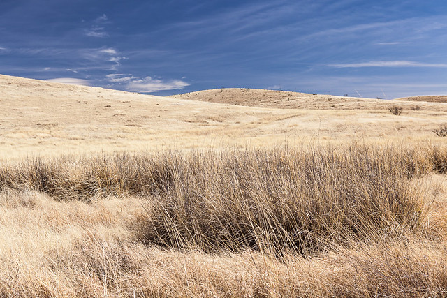 Grasslands at Empire Ranch