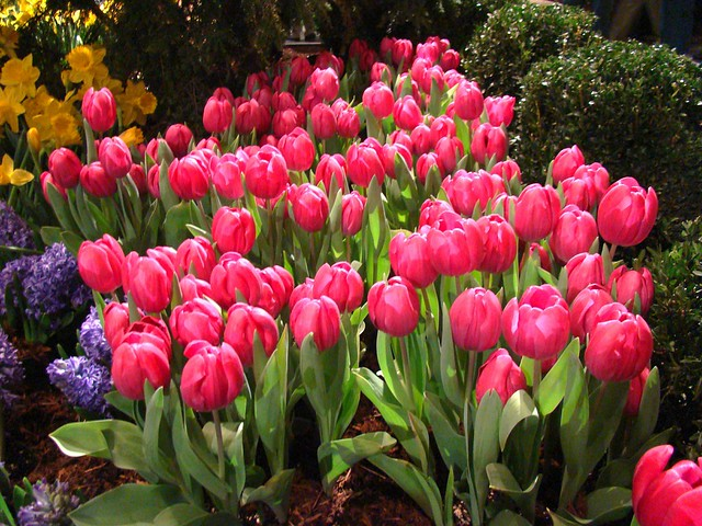Spring Flowers | Flickr - Photo Sharing!