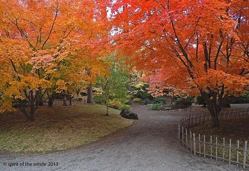 autumn fall japanesegarden nikonflickraward spokanewashingtonstate