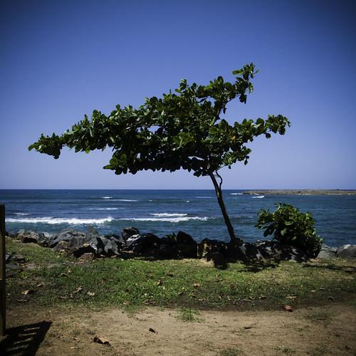 Windy Lean, Balneario El Escambrón, Old San Juan, Puerto Rico