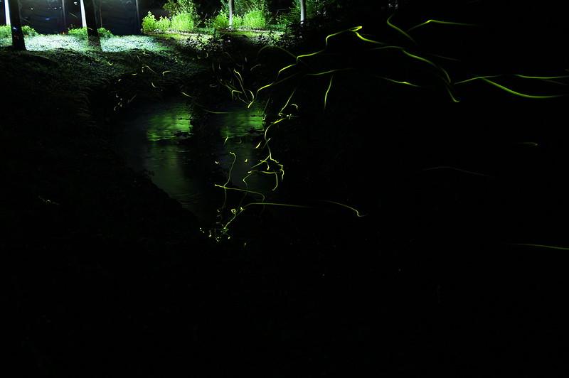 ホタル_201507_NO2