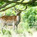 Deer in the forest by Robban.G