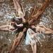 Alma and her friends: Darla, Lola, Shiara, Lily and Kristen by davidbocci.es/refugiorosa
