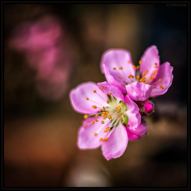 early bird blossom