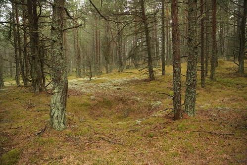 Naissaaire Looduspark