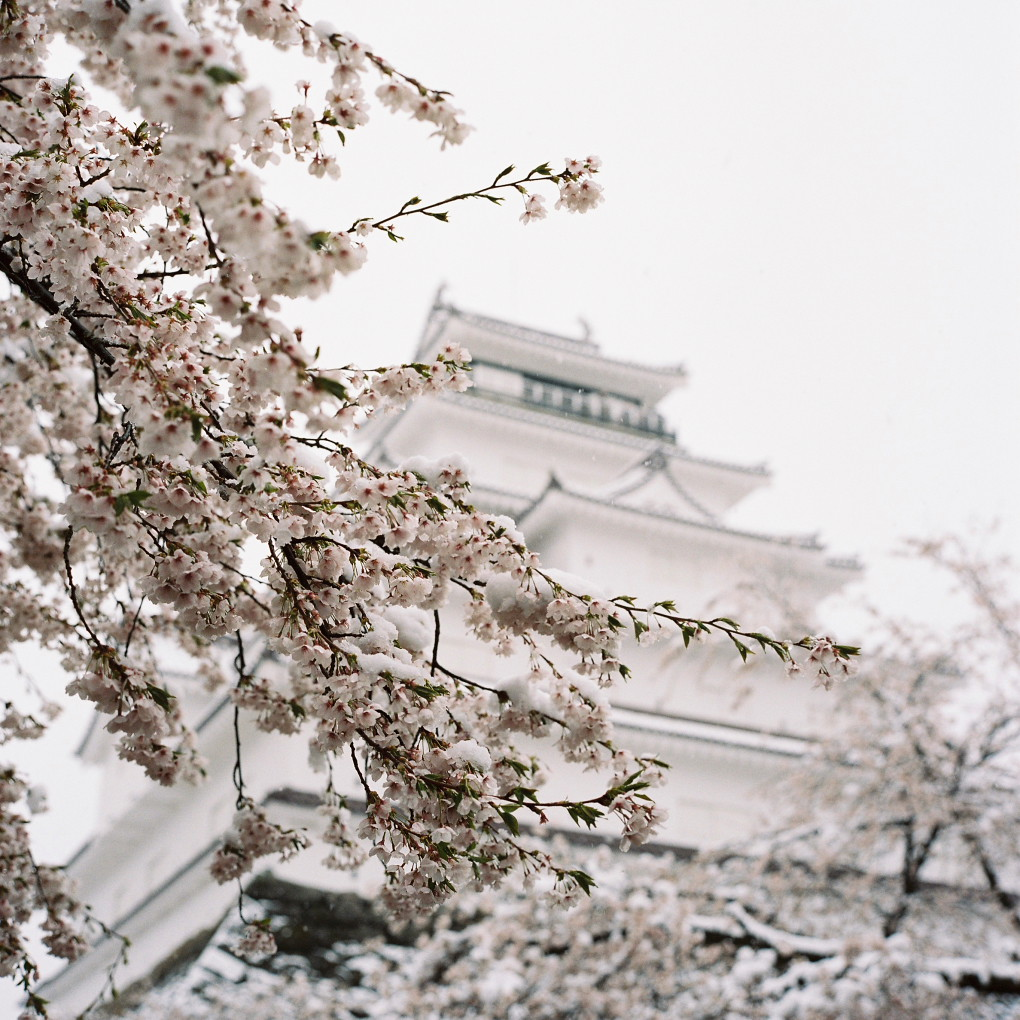 桜と雪と鶴ヶ城 02