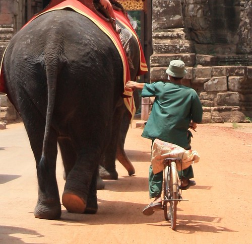 trying to catch a ride from an elephant. Looks dangerous #notWorthTheElephantKickToTheFace